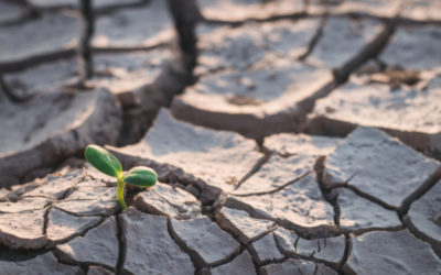 Drought Infrastructure Grant